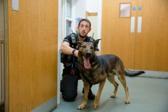 Police dogs5